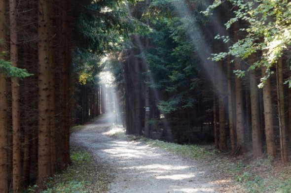 Forest trail with rays of sunshine, Buschandlwand mountain, Wachau valley, Waldviertel region, Lower Austria, Austria, Europe